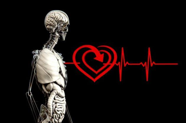 Pesquisa mostra que pessoas com cirrose hepática têm prejuízo na recuperação da frequência cardíaca