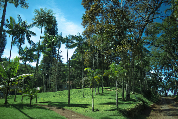 Jardim Botânico UFJF (Foto: Maria Otávia Rezende/UFJF)