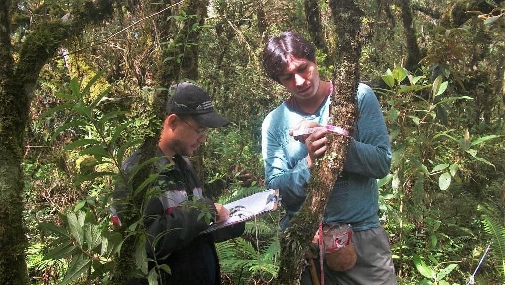Equipe mede o diâmetro das árvores - em cinco a dez anos será possível saber características sobre crescimento das espécies marcadas (Foto: Divulgação/Equipe do projeto)