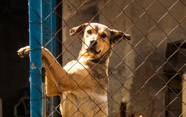 Biotrote Solidário vai ajudar animais acolhidos pela Sociedade Juizforense de Proteção aos Animais e ao Meio Ambiente (Foto: Pedro Soares)