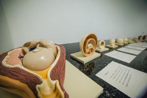 Exposição Célula ao Alcance da Mão. (Foto: Ciro Cavalcanti)