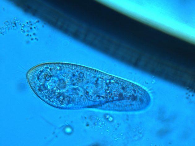"""Estudo analisa microrganismos, ou simplesmente """"microbiotas"""", que fazem o trabalho de compostagem (Foto: Arquivo pessoal)"""