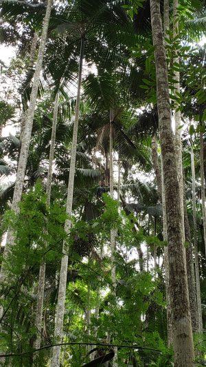 coleta açai jardim botanico ufjf foto raul mourao ufjf
