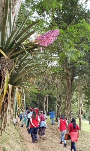jardim botanico ufjf _ Raul Mourao UFJF (3)