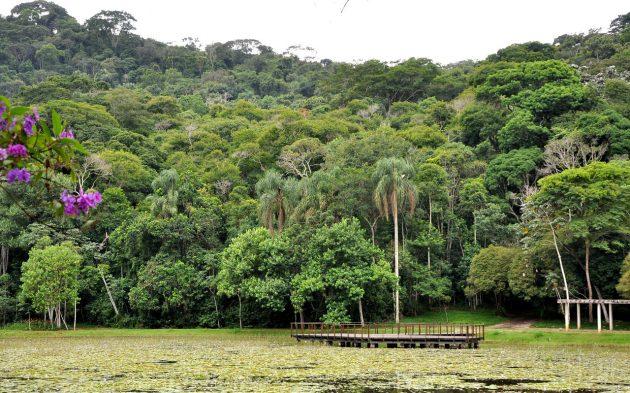Confira 6 árvores que mostram como povos indígenas conservam e conhecem a  biodiversidade - Notícias UFJF