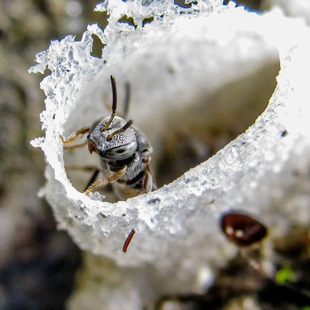 abelhas sem ferrao Foto Joao Luis Lobo