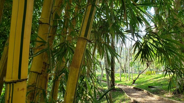 jardim_botanico_ufjf__Foto_Raul_Mourao_UFJF