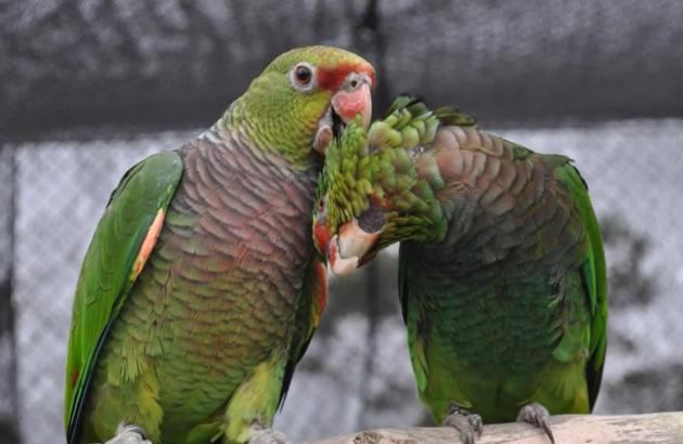 """Tráfico de animais silvestres é tema de vídeo do """"Divulgando Ciência"""""""