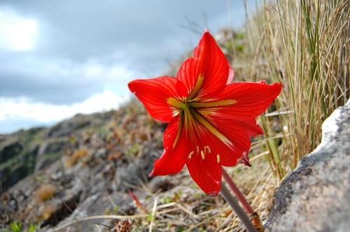 Pesquisa avalia composição florística em região da Serra da Mantiqueira