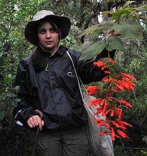 Pesquisa faz levantamento de plantas da família Gesneriaceae na Serra da Mantiqueira